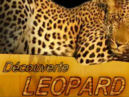 location leopard